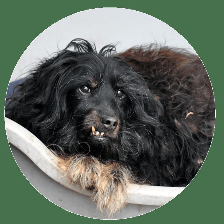 Hundesenioren - Altenheim für Tiere