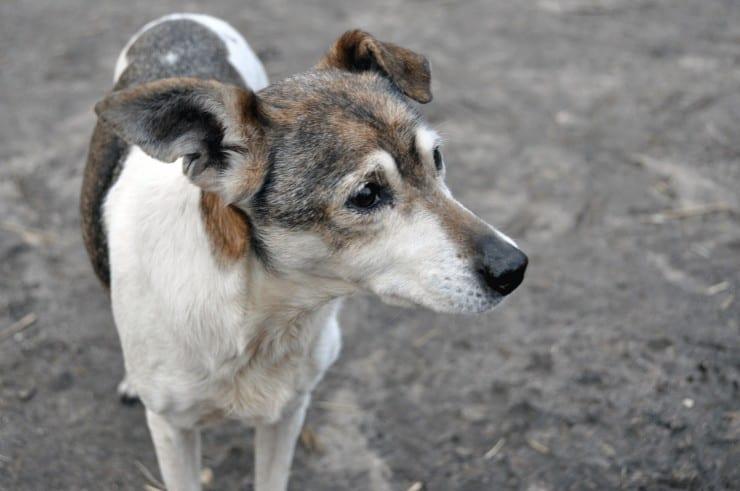 Warum Hunde nicht so lange leben
