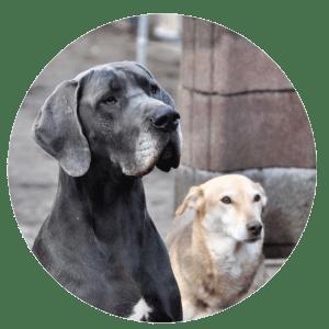 Ausgesetzt - Altenheim für Tiere
