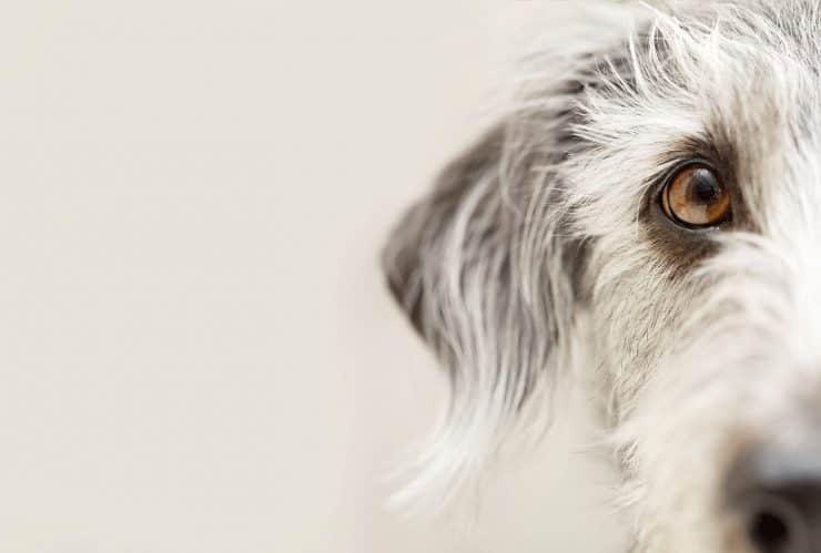 hundefakten
