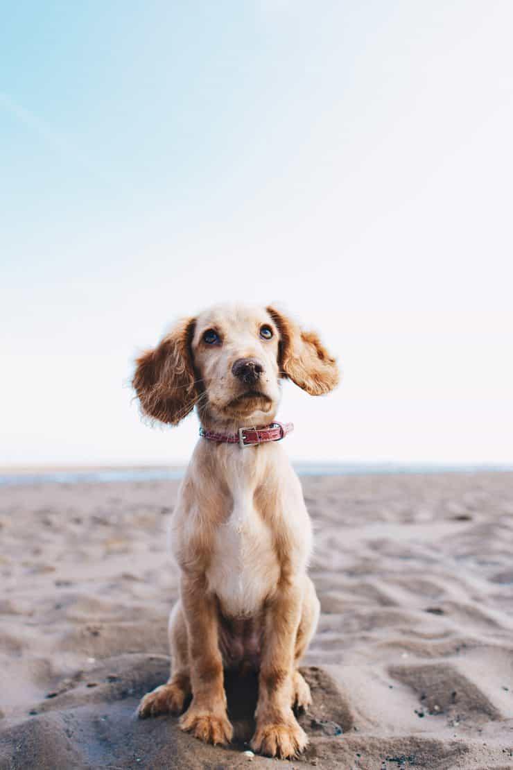 Gut versichert mit dem Hund in den Urlaub