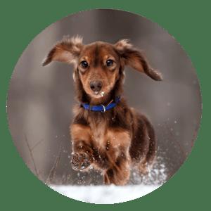Buddy and Bello - Hunde im Winter - Bewegung
