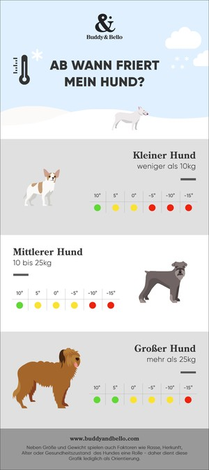 Buddy and Bello - Infografik - Hunde im Winter - ab wann friert mein Hund