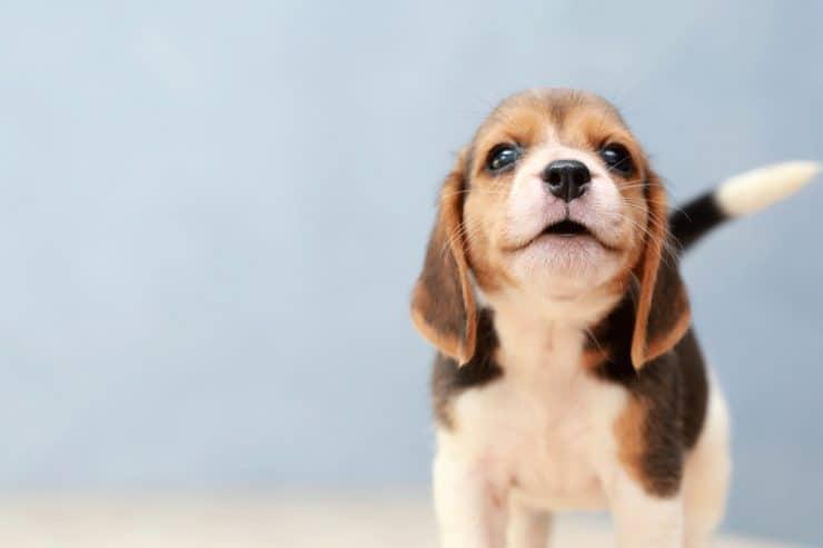 Darmgesundheit des Hundes