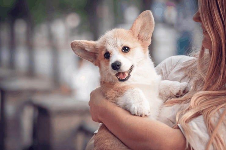 Hundehaftplicht, Hundesteuer