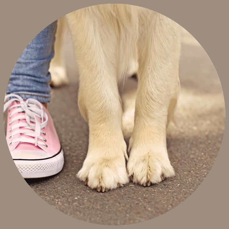 Hund Sommer Asphalt - Buddy & Bello Sommertips
