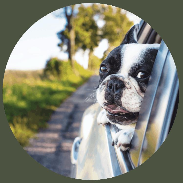 Hund Sommer Auto - Sommertipps