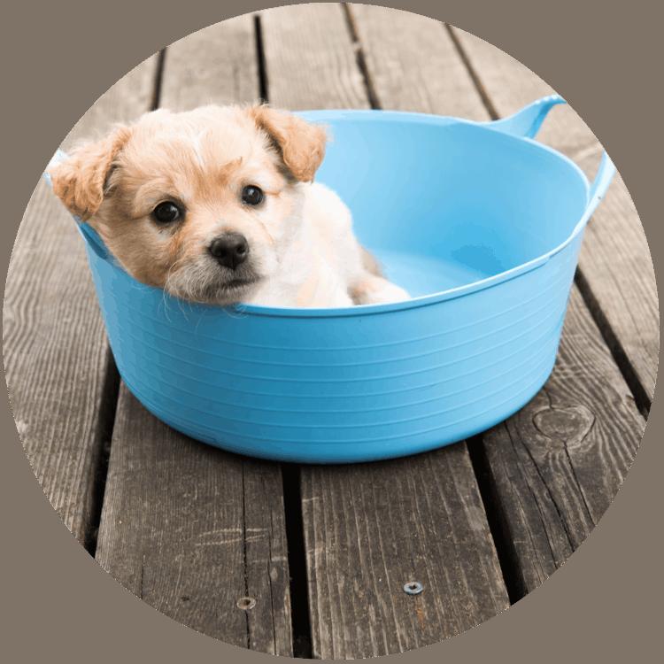 Hund kühlen - Welpe in Wanne