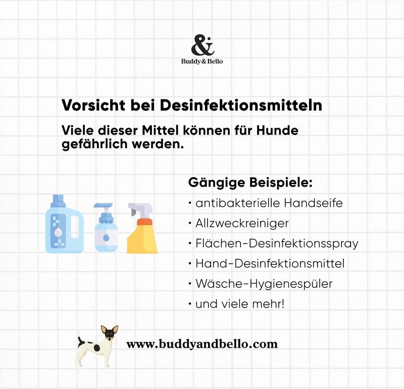 Buddy and Bello Infografik - Corona - Vorsicht bei Desinfektionsmitteln bei Hunden