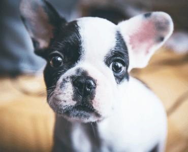 Hund vom Züchter oder aus dem Tierschutz