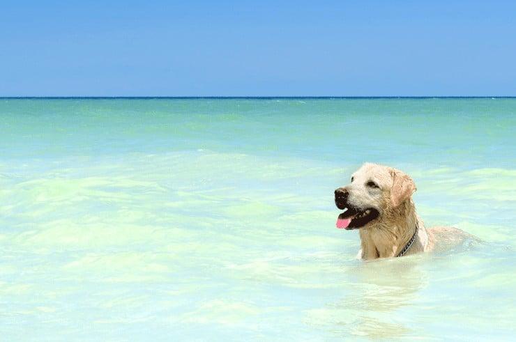 Buddy & Bello Sommertipps für Hunde