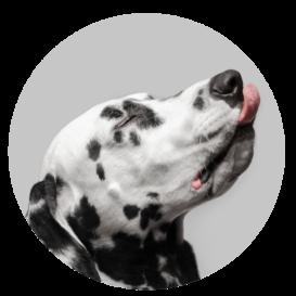 Buddy and Bello - Hundekekse aus Leberwurst und Firschkäse