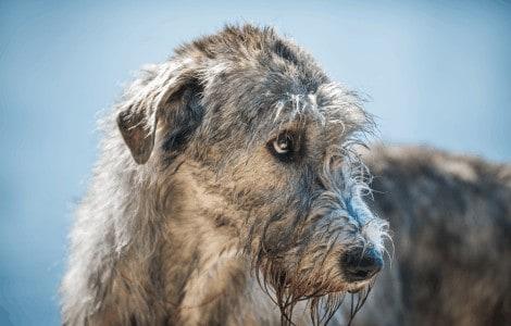 Warum Hund nicht so lange leben - Eine Buddy & Bello Geschichte