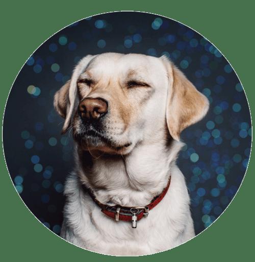 Buddy and Bello Weihnachtskekse für Hunde
