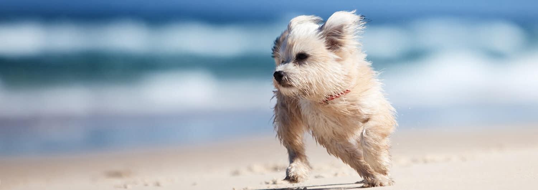 Buddy and Bello - Sonnencreme für den Hund