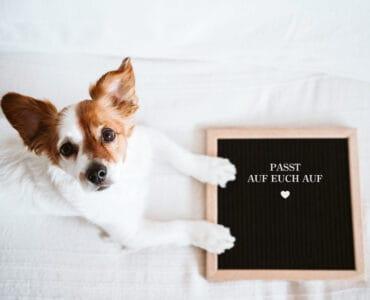 Corona und Hund. Kleiner Hund hat die Pfoten auf einem Schild, das sagt