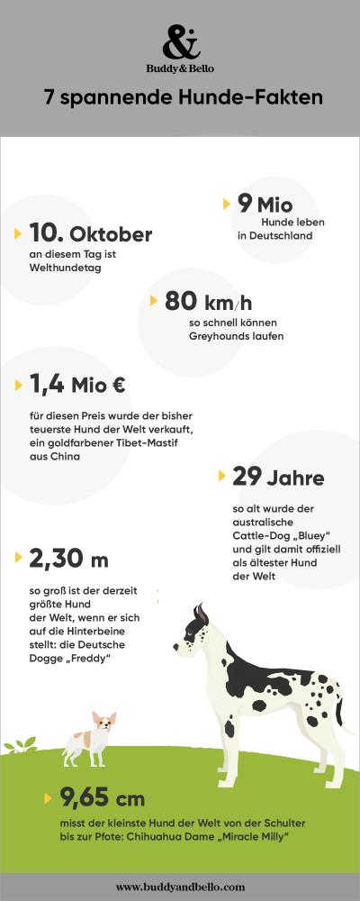 7 spannende Hundefakten Infografik