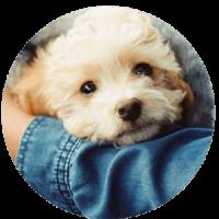 Buddyandbello_Hund_im_Arm